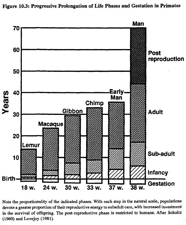 race-evolution-and-behavior-rushton-figure-10-3