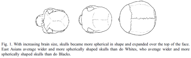 Brain size, IQ, and racial-group differences - Evidence from musculoskeletal traits (Figure 1)