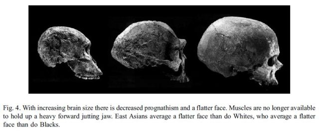 Brain size, IQ, and racial-group differences - Evidence from musculoskeletal traits (Figure 4)