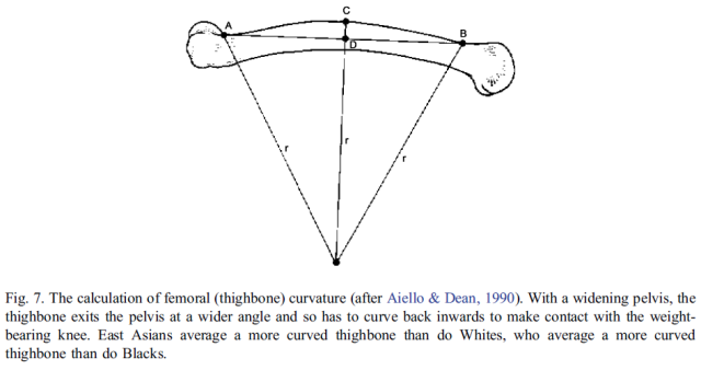 Brain size, IQ, and racial-group differences - Evidence from musculoskeletal traits (Figure 7)